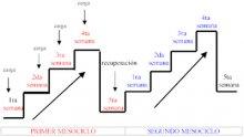 Planificación y Organización del proceso de Entrenamiento